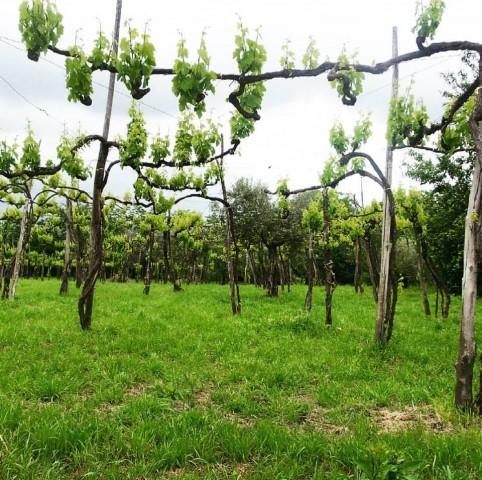 Lo starseto di #taurasi terra di vini senza tempo #winelover @cantinelonardo