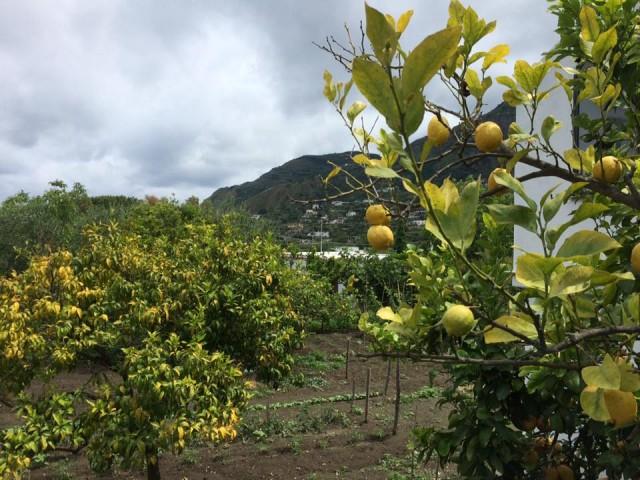 Pietratorcia, panorama dal limoneto