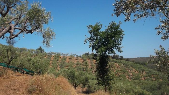 Azienda Agricola Ermma Olivi