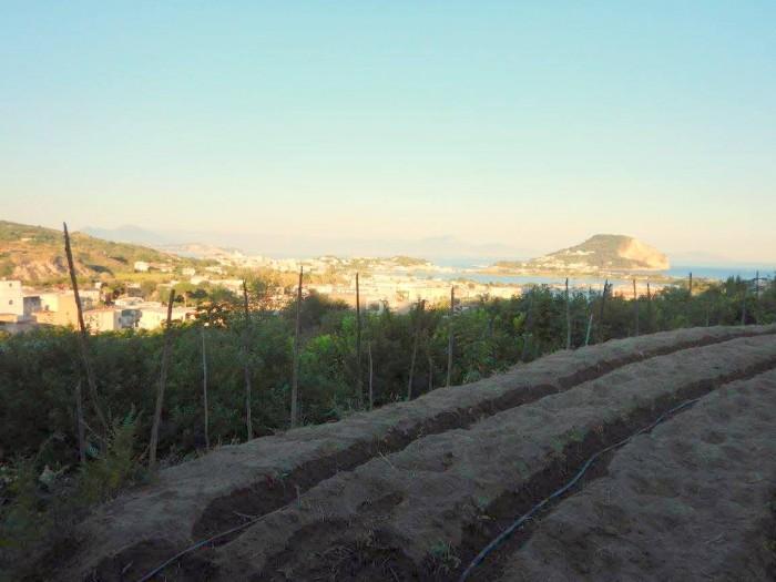 Agriturismo Don  Salvatore, il golfo dagli orti di Km Zero Flegreo