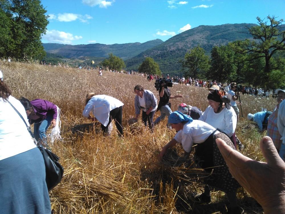 Un campo di biondo grano