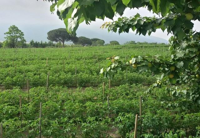 Terraviva I campi  e il Vesuvio