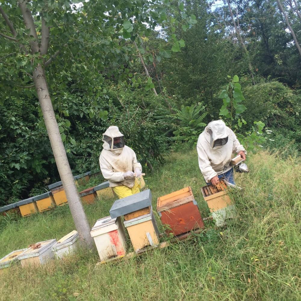 Azienda Dama, apicoltura