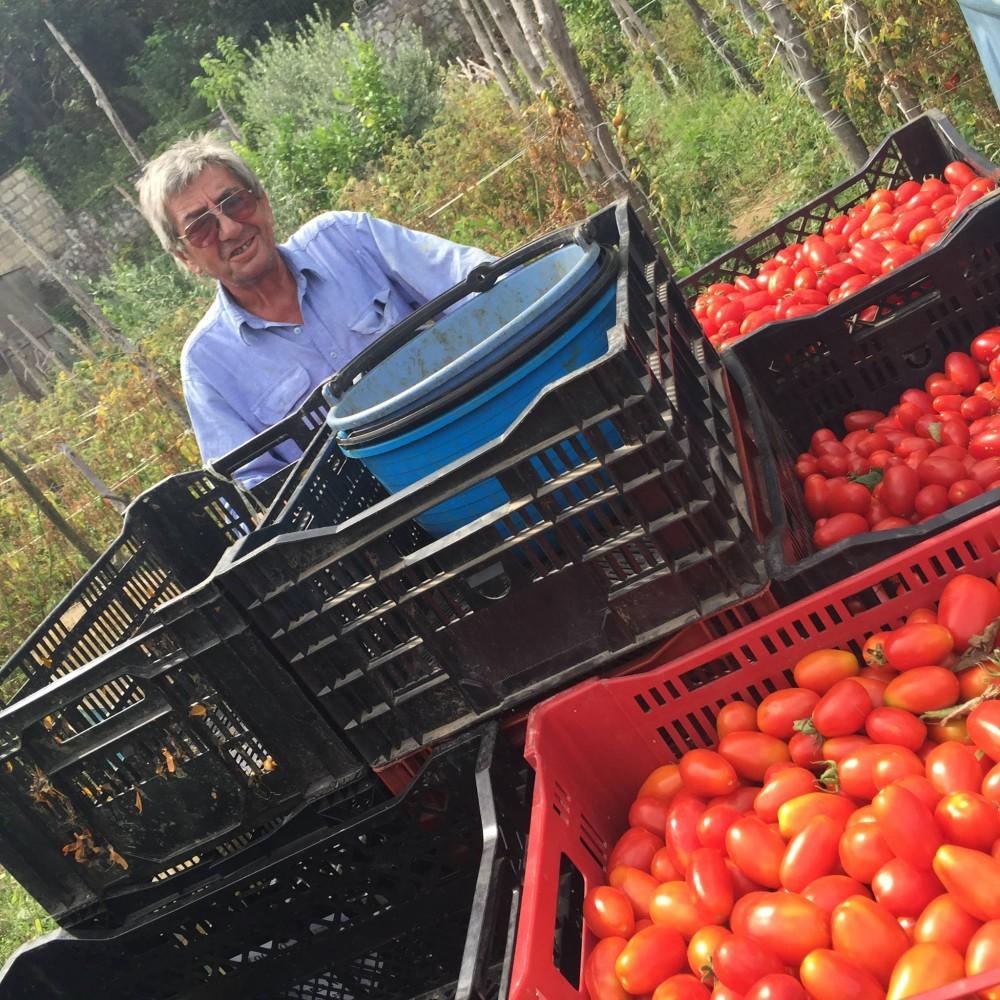 Pomodori Dama, Dino D'Auria