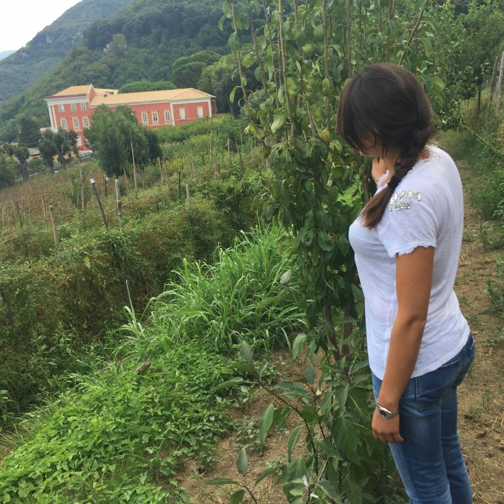 Pomodori Dama , Marianna e la Reggia