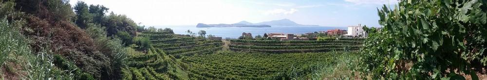 A Monte di Procida, un inaspettato anfiteatro fatto di vigne.