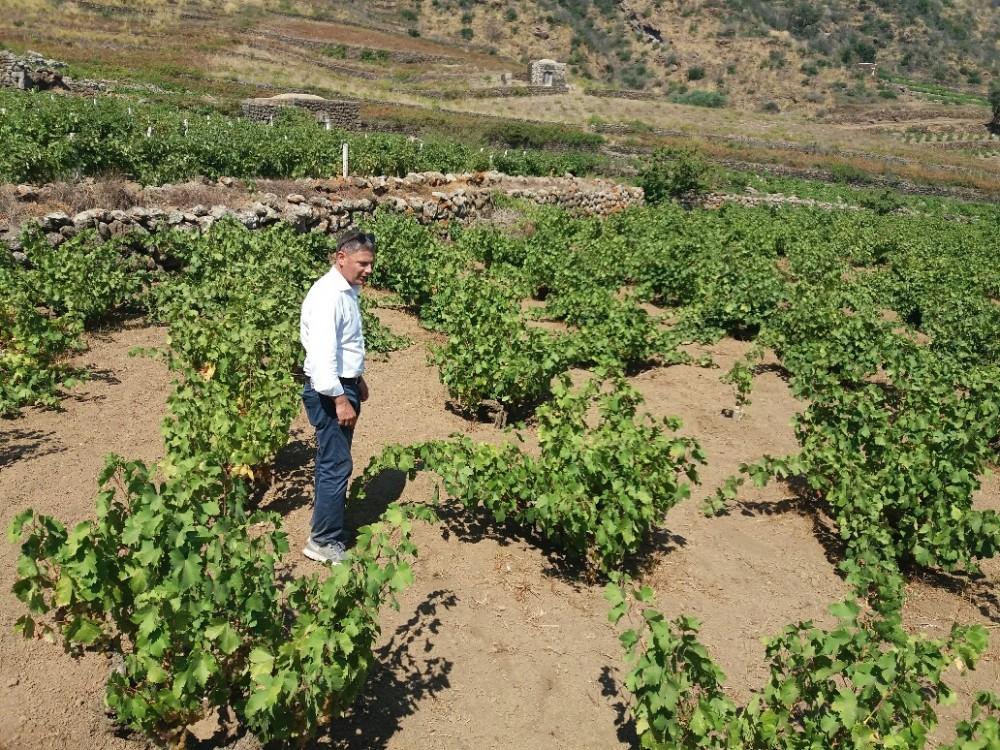 Baldo Palermo in mezzo alle vigne