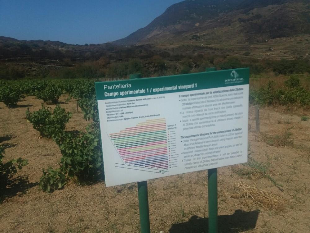 Campo Sperimentale Pantelleria