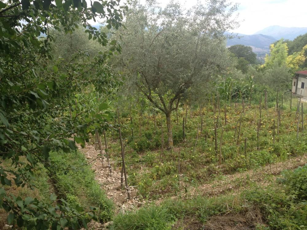 Casa Cauli, orto con frutteto