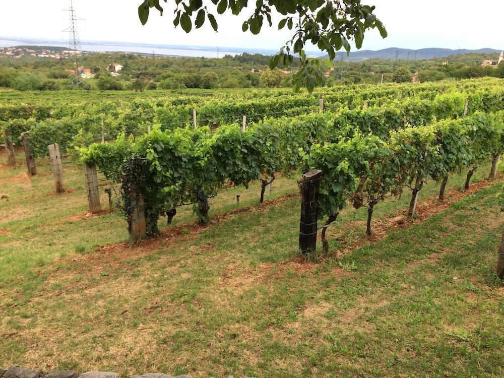 Škerk, vigne che guardano il mare