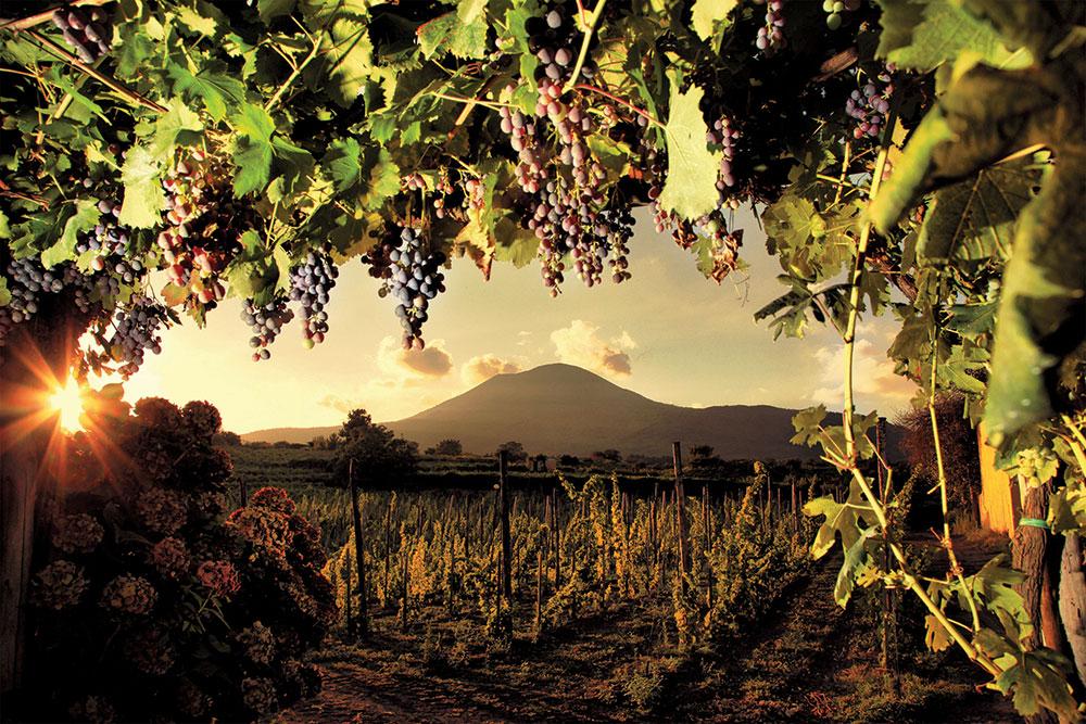 Le vigne sul Vesuvio