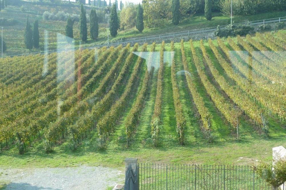 Al Vigneto, le vigne