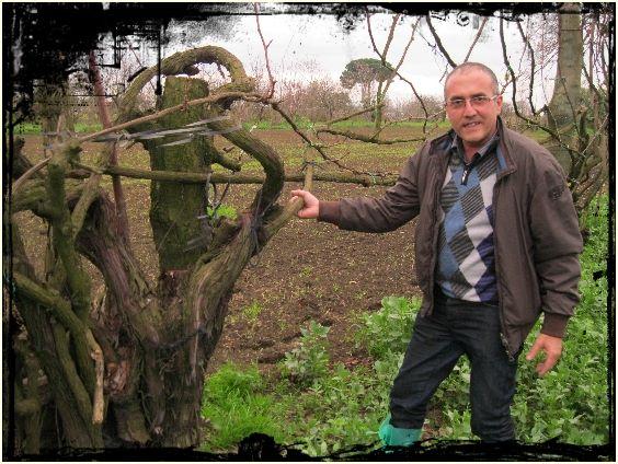 Carlo Numeroso