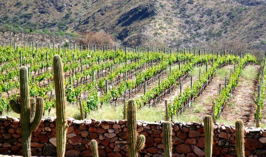 Credit www.winerist.com