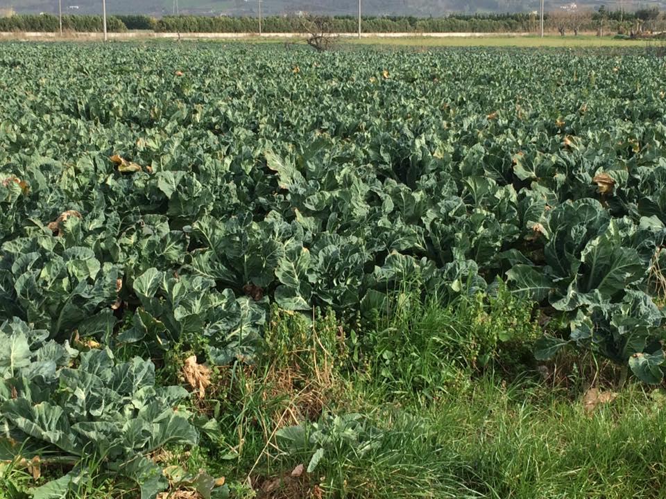 La Dispensa San Salvatore, campi coltivati