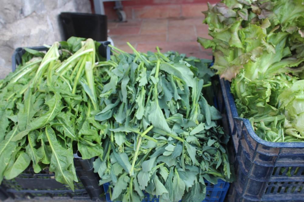 Villa Chiara le verdure raccolte nell'orto