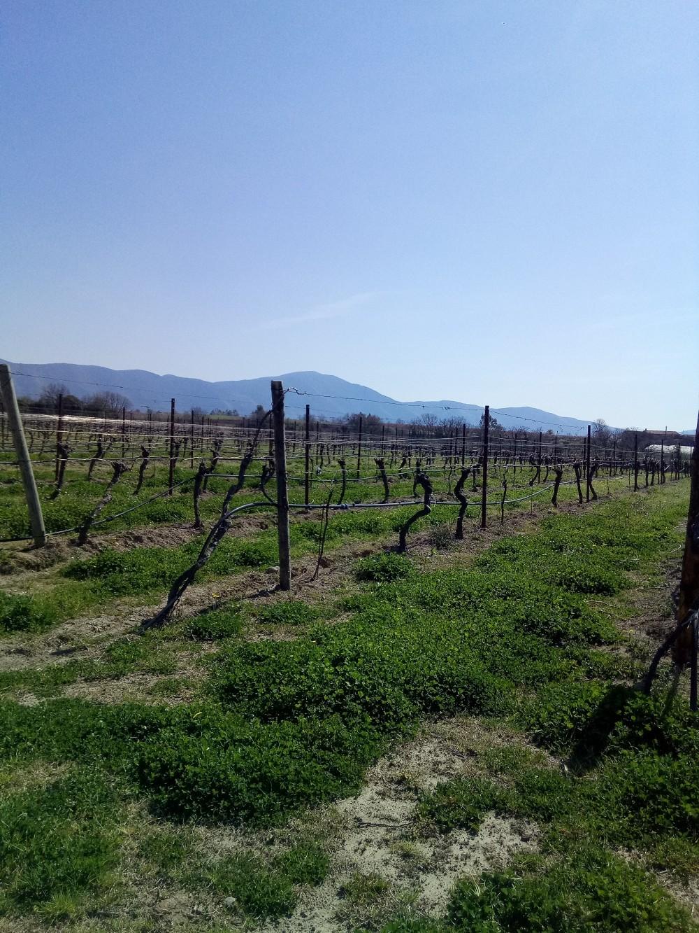 Villa Matilde Vigna Caracci