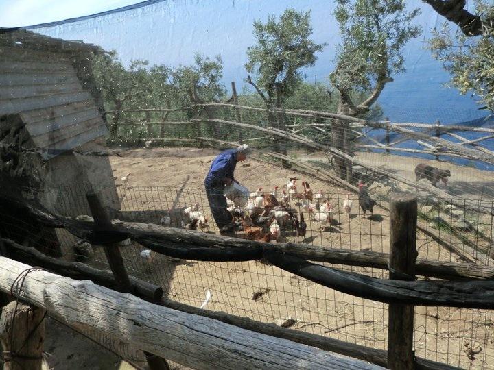 Le Peracciole, il bistellato Alfonso Iaccarino fa mangiare galline e polli