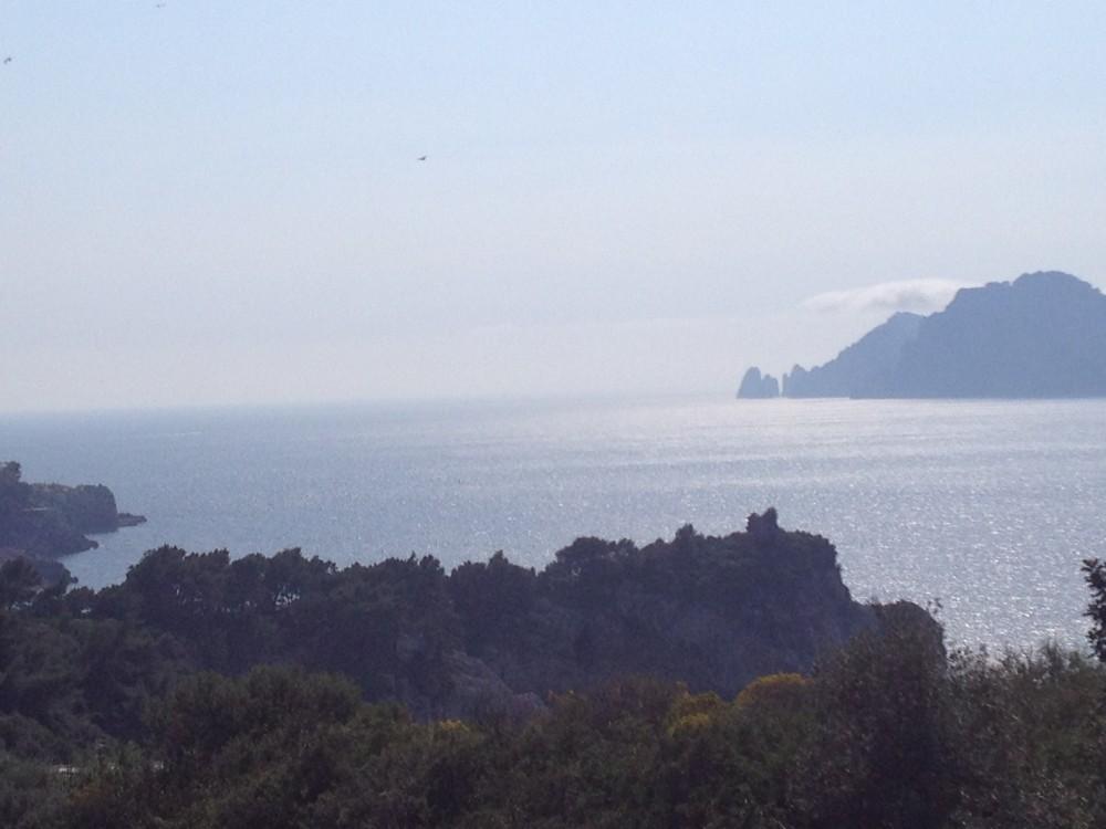 Capri vicina