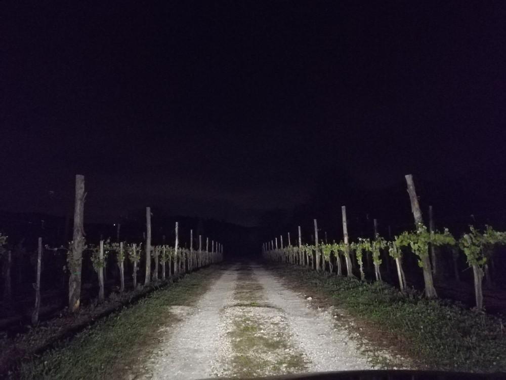 Il Melograno, vigneti di notte