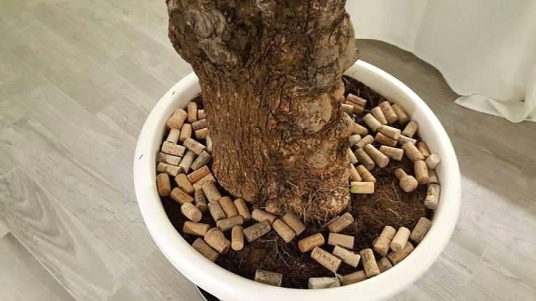 SenzaTempo Osteria, i tappi di vini nel vaso dell'olivo