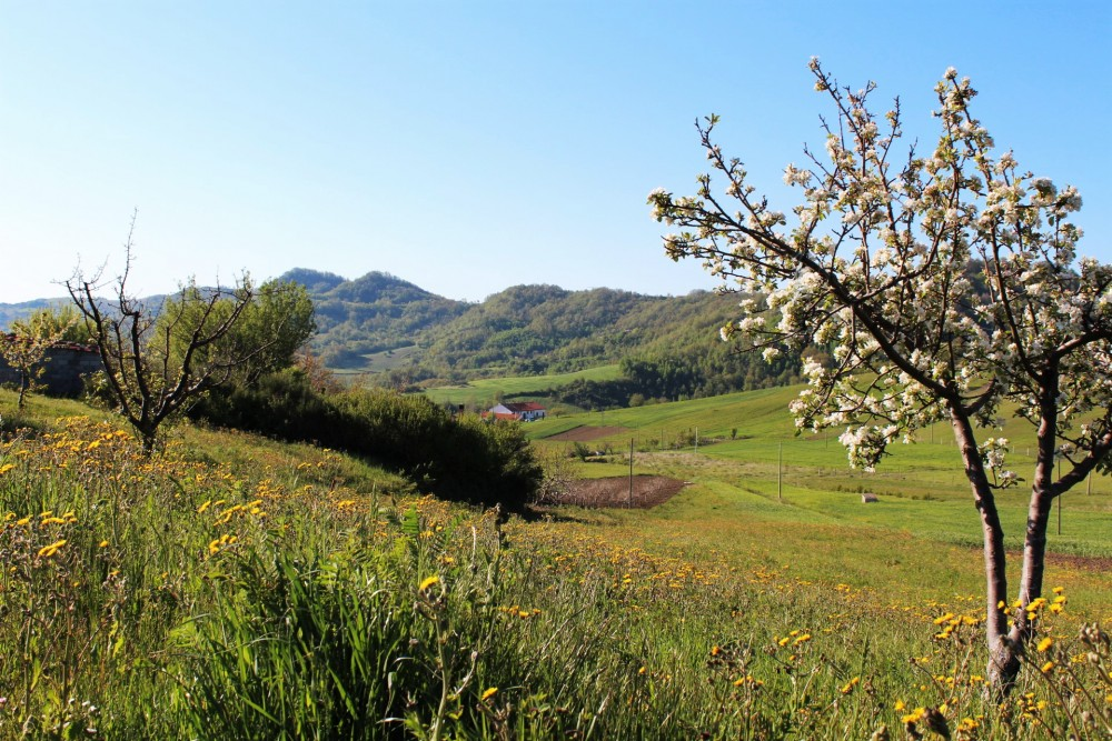 Locanda Mammi' – veduta della valle circostante