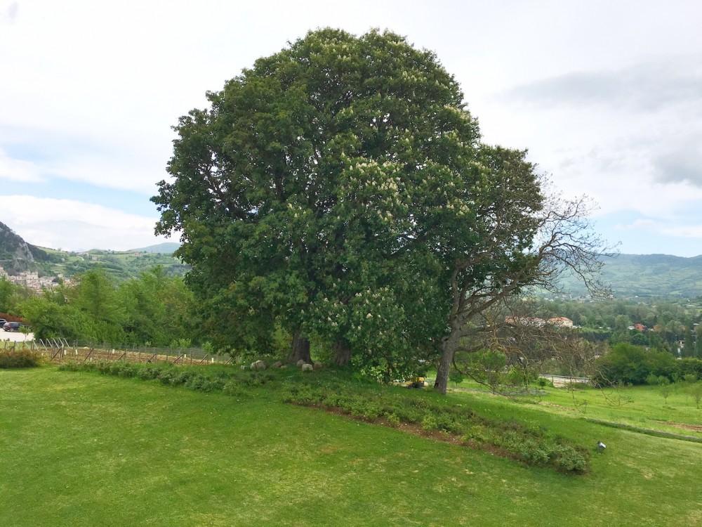 Casadonna Il grande albero