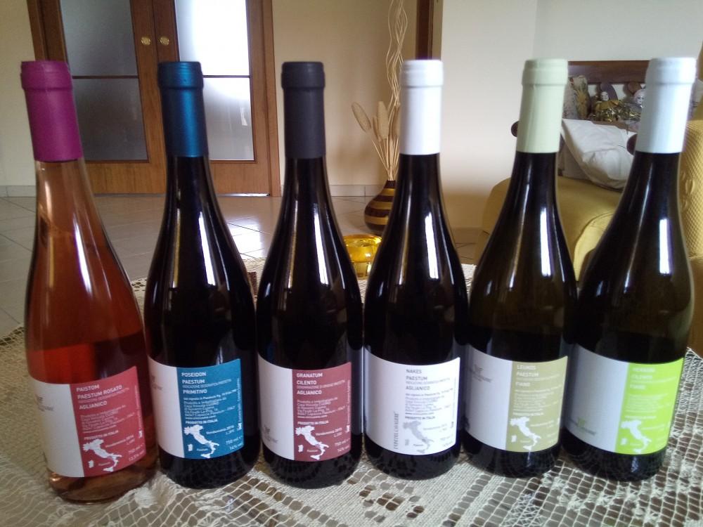 I Vini del Cavaliere - Controetichette dei vini degustati