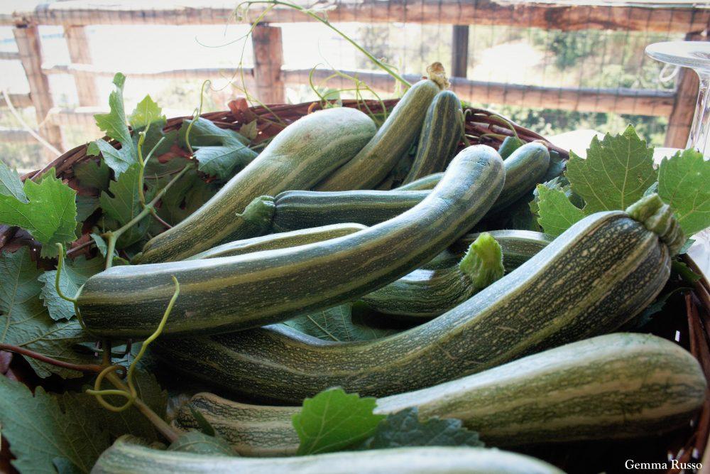 Agriturismo Iovino - Zucchine San Pasquale