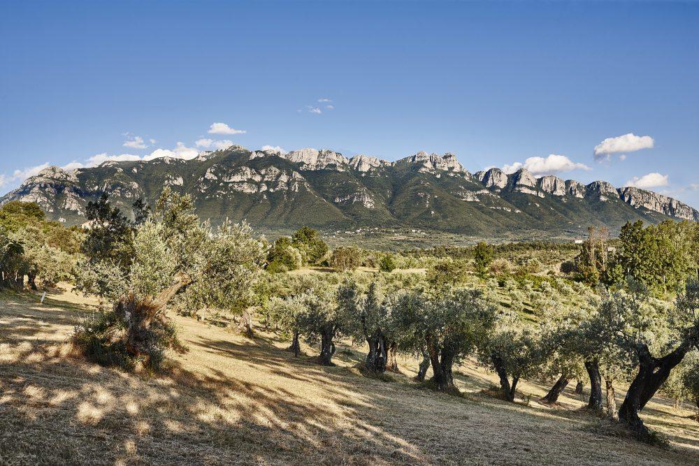 Azienda agricola Madonna dell'Olivo - panoramica Alburni
