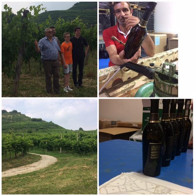 Graziano Merotto e i suoi collaboratori, in vigna ai piedi del Vigneto Castel a Col San Martino, i suoi vini