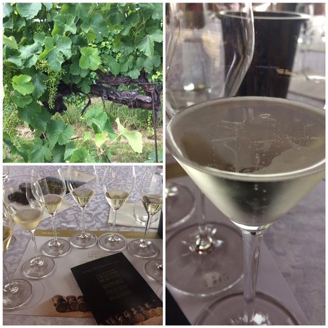Vecchie viti di Glera, il colore del Vecchie viti di Glera, il colore del Prosecco Superiore, la Verticale di 8 annate di Cuvee del Fondatore Graziano Merotto