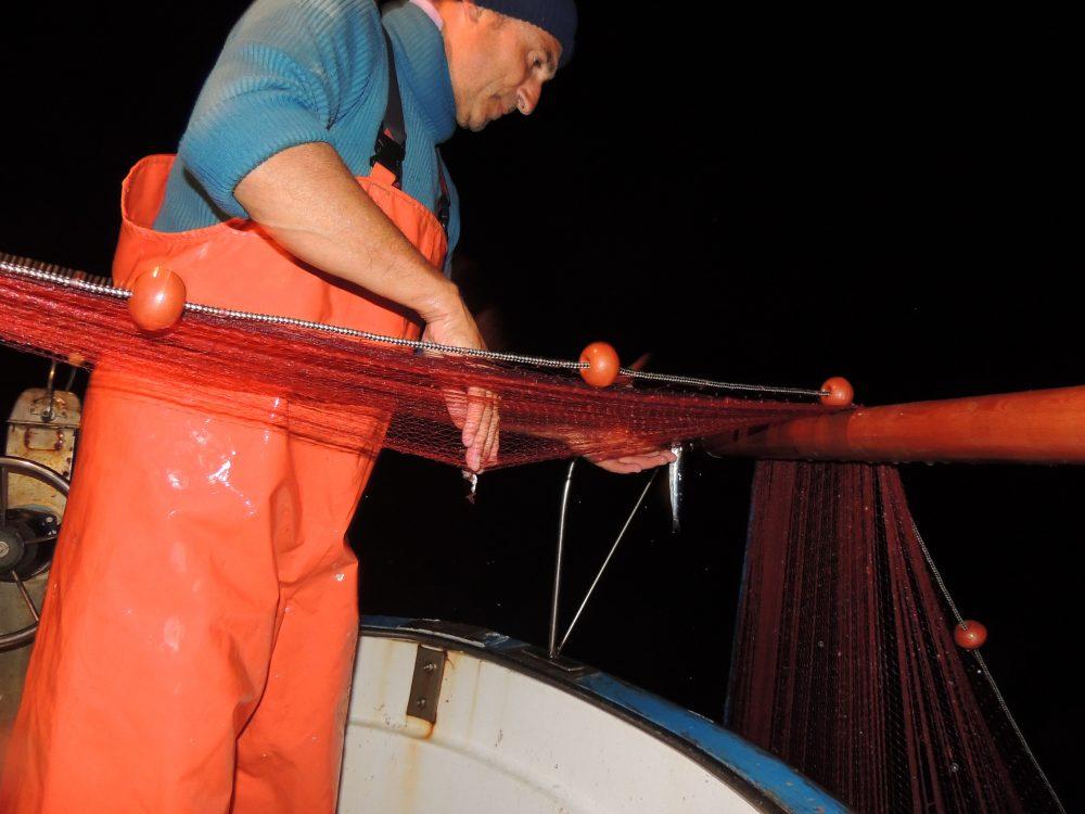 Pesca delle alici