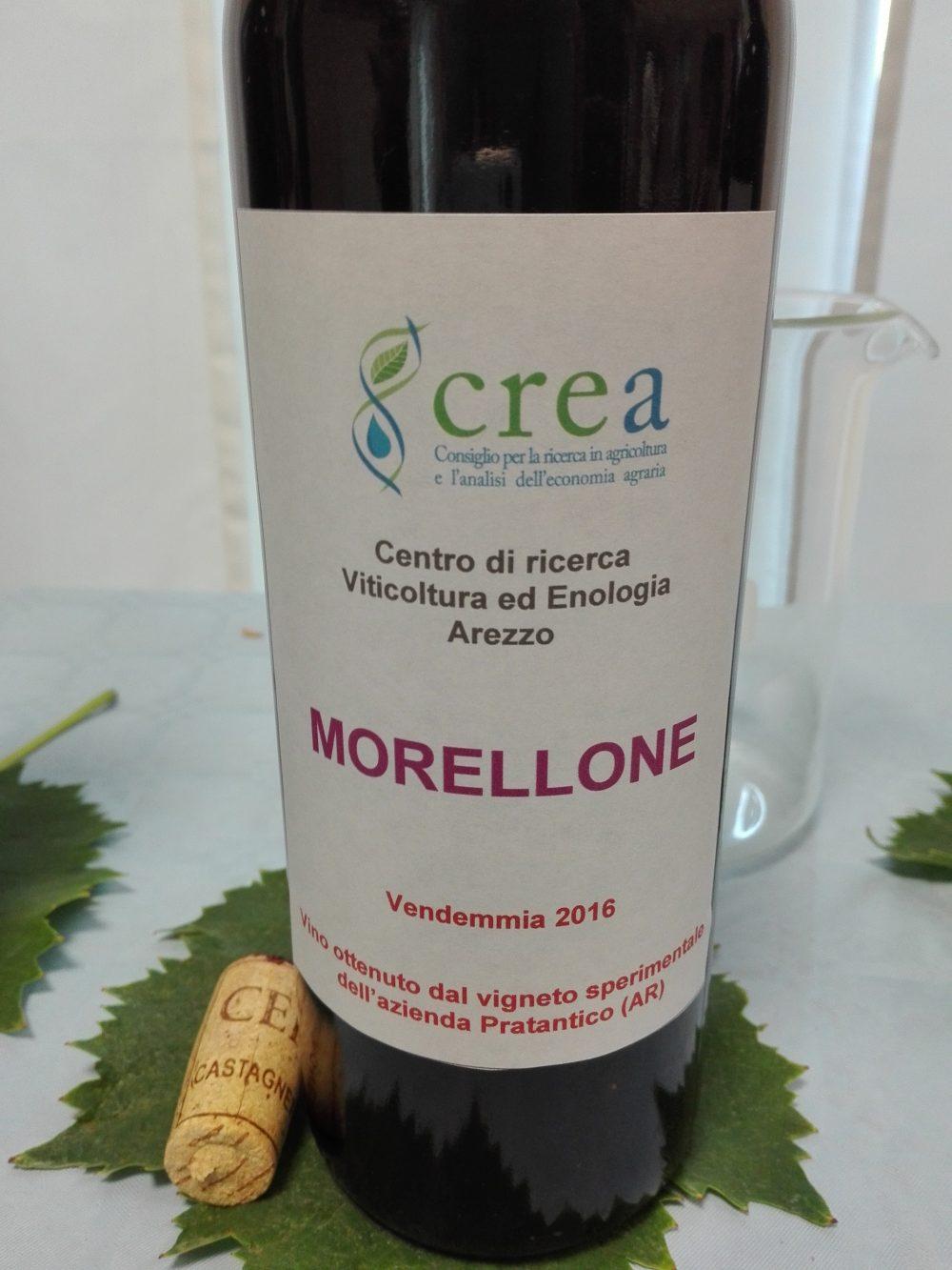 Morellone 2016, da microvinificazione Crea