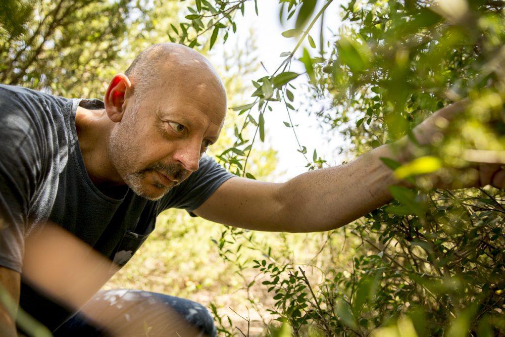 Pascucci al Porticciolo - Gianfranco raccoglie erbe selvatiche all'oasi WWF