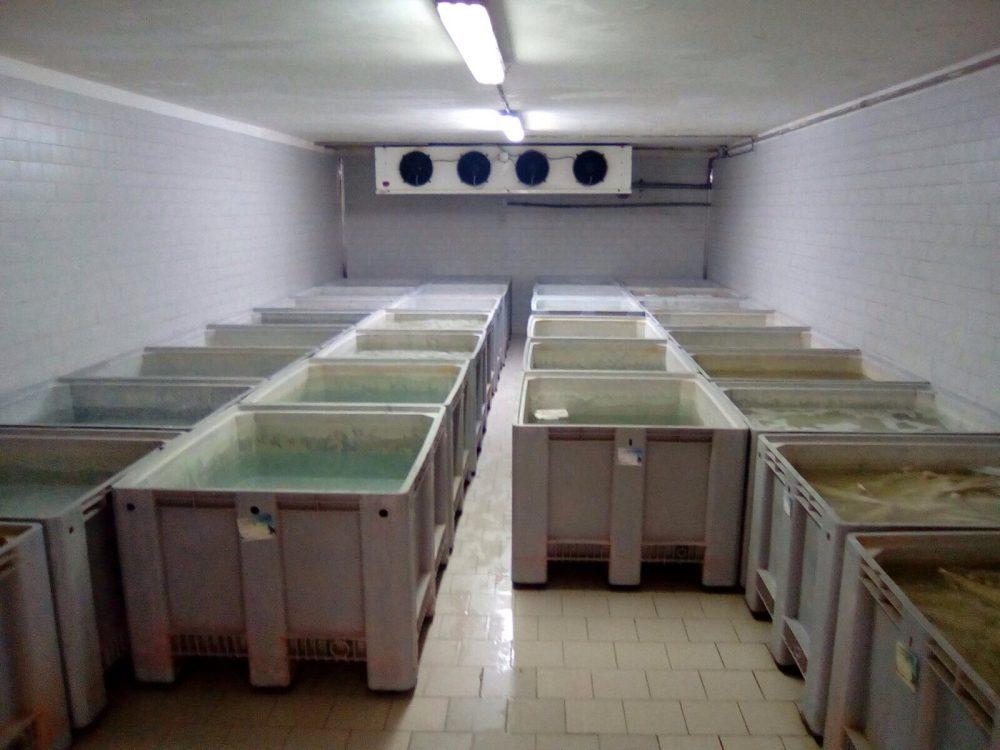 Italfisch, vasche