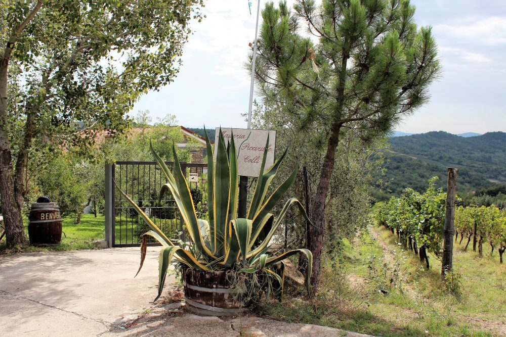 Masseria Piccirillo – ingresso e vigneto