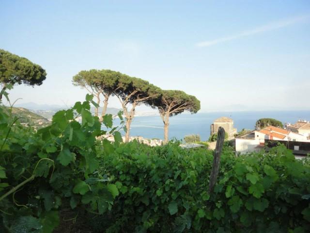 Vigne di Raito e sullo sfondo Villa Guariglia