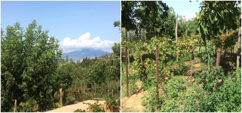 Villa Chiara, il Vesuvio e l'orto
