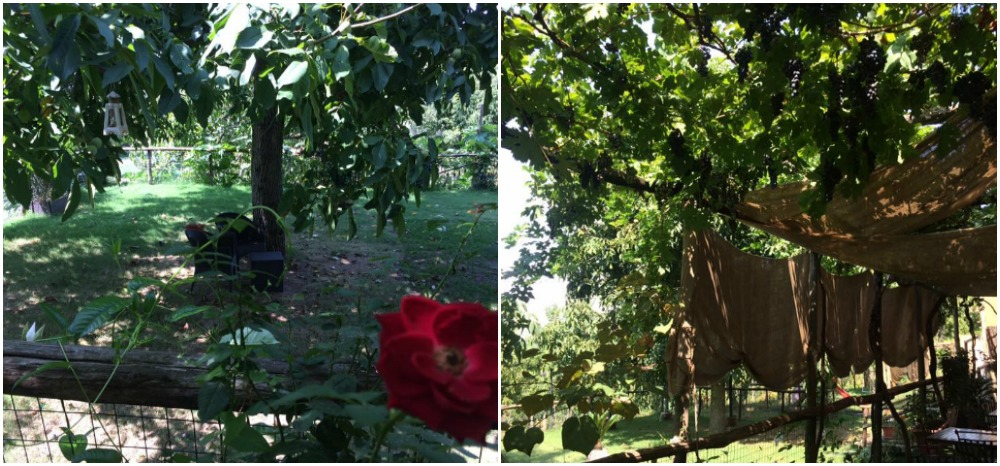 Villa Chiara, il noce e l'uva