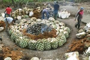 Interrata e incendiata l'agave sviluppa il suo originale carattere