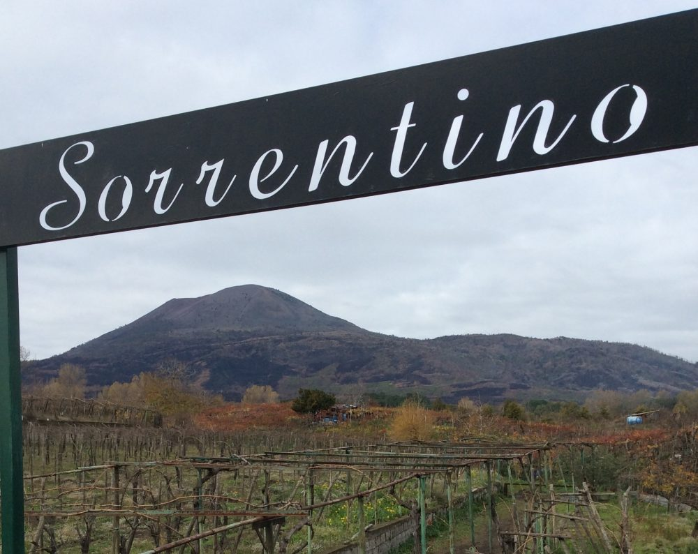 Azienda Sorrentino