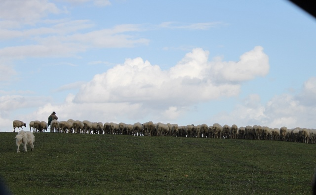 Tenuta Fiorano - allevamento di ovini