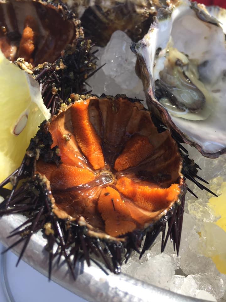 La taverna del mozzo, ricci e ostriche, dettaglio