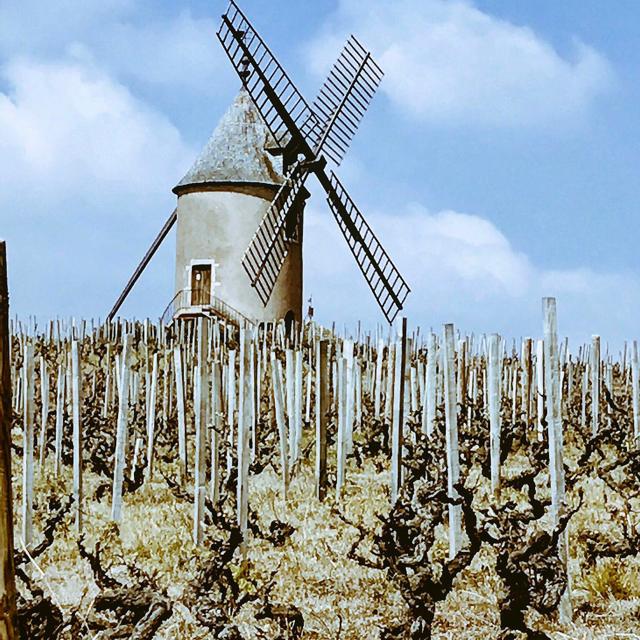 Le Chateau du Moulin-a'-Vent