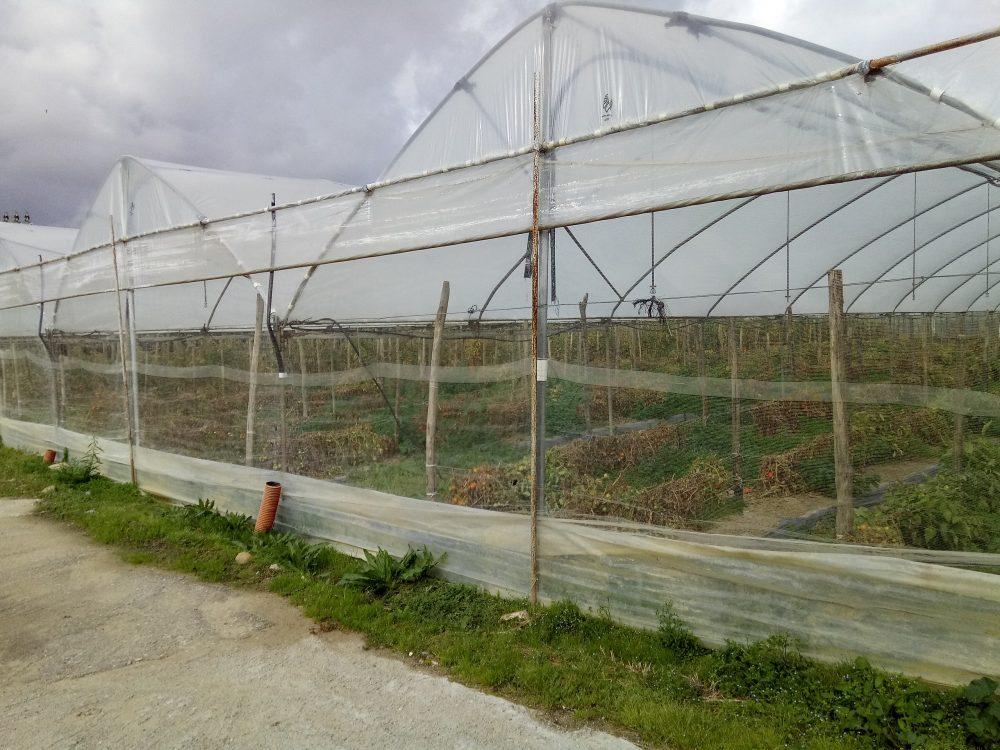 Azienda Agriturisrica Parmenide Serra