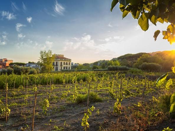 Il recupero e la valorizzazione delle vigne storiche