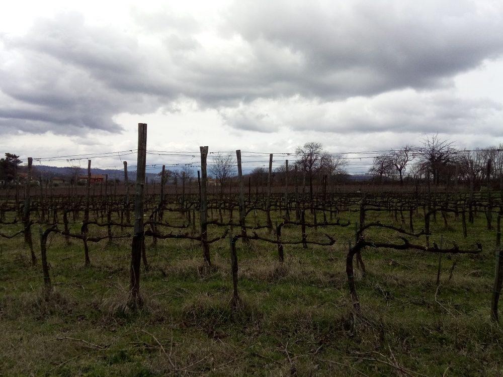Contrade di Taurasi Vigneto per il Taurasi Vigne d''Alto