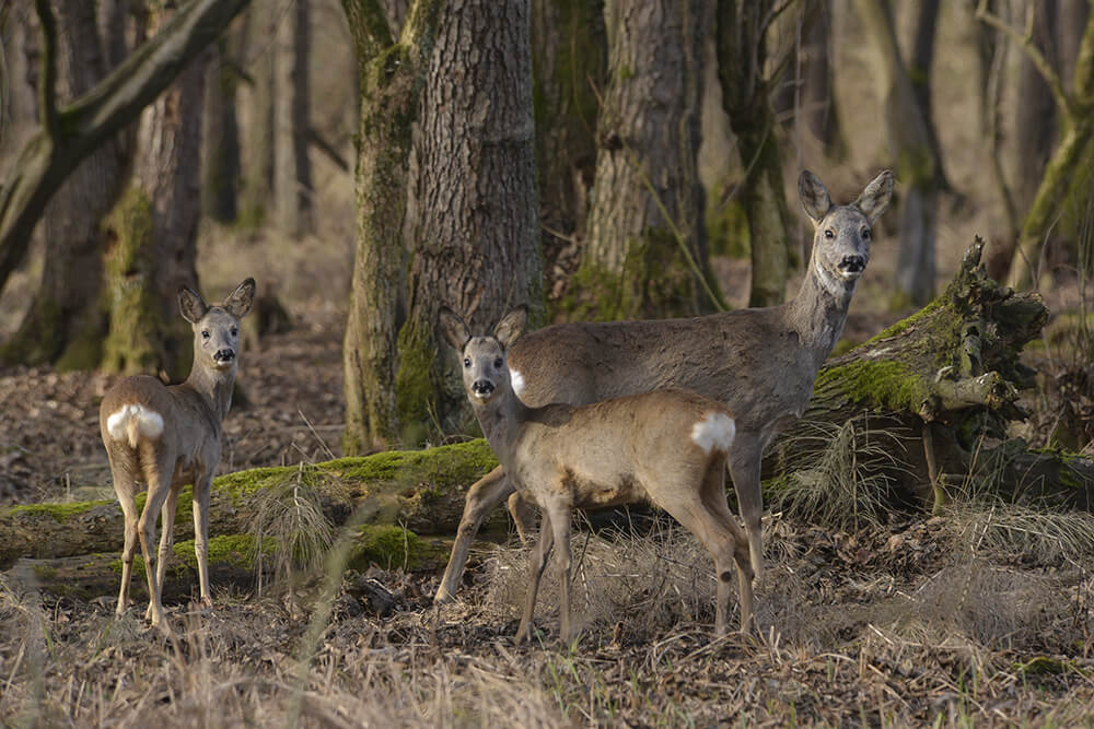Riserva San Massimo, fauna, foto dal web