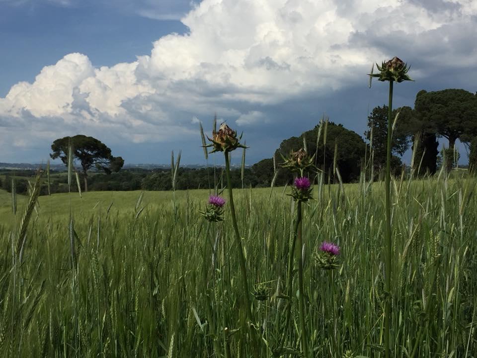 Casali del Pino, panorama sul Parco di veio
